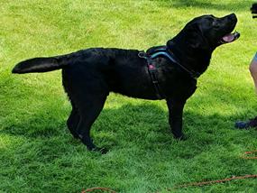 Kurage labbe ocd canineopat elterapi balansbollsträning